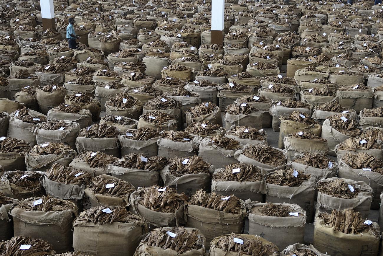 tabacco, asta, lilongwe, tobacco, auction, malawi